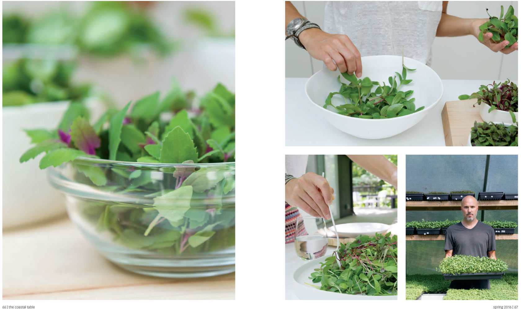 Goodwater Farms Micro Greens, pg 4, The Coastal Table, Morgan Ione Yeager