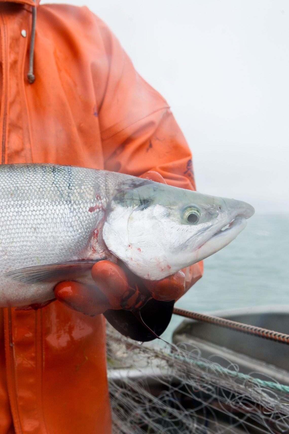 NYC + Chicago Travel Food Photographer - Alaska Salmon Fishing