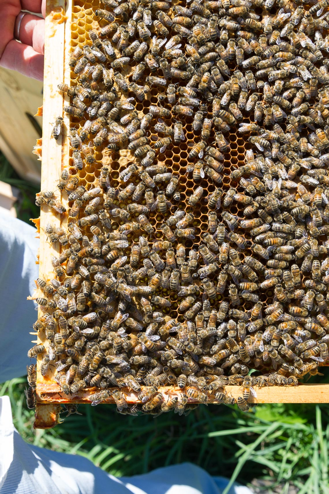 NYC Farm Photographer- beekeeper upstate NY