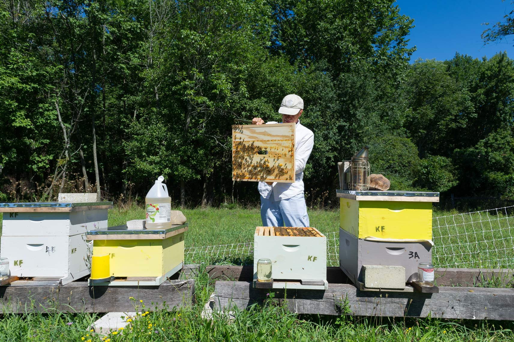 NYC Farm Photographer- beekeeper