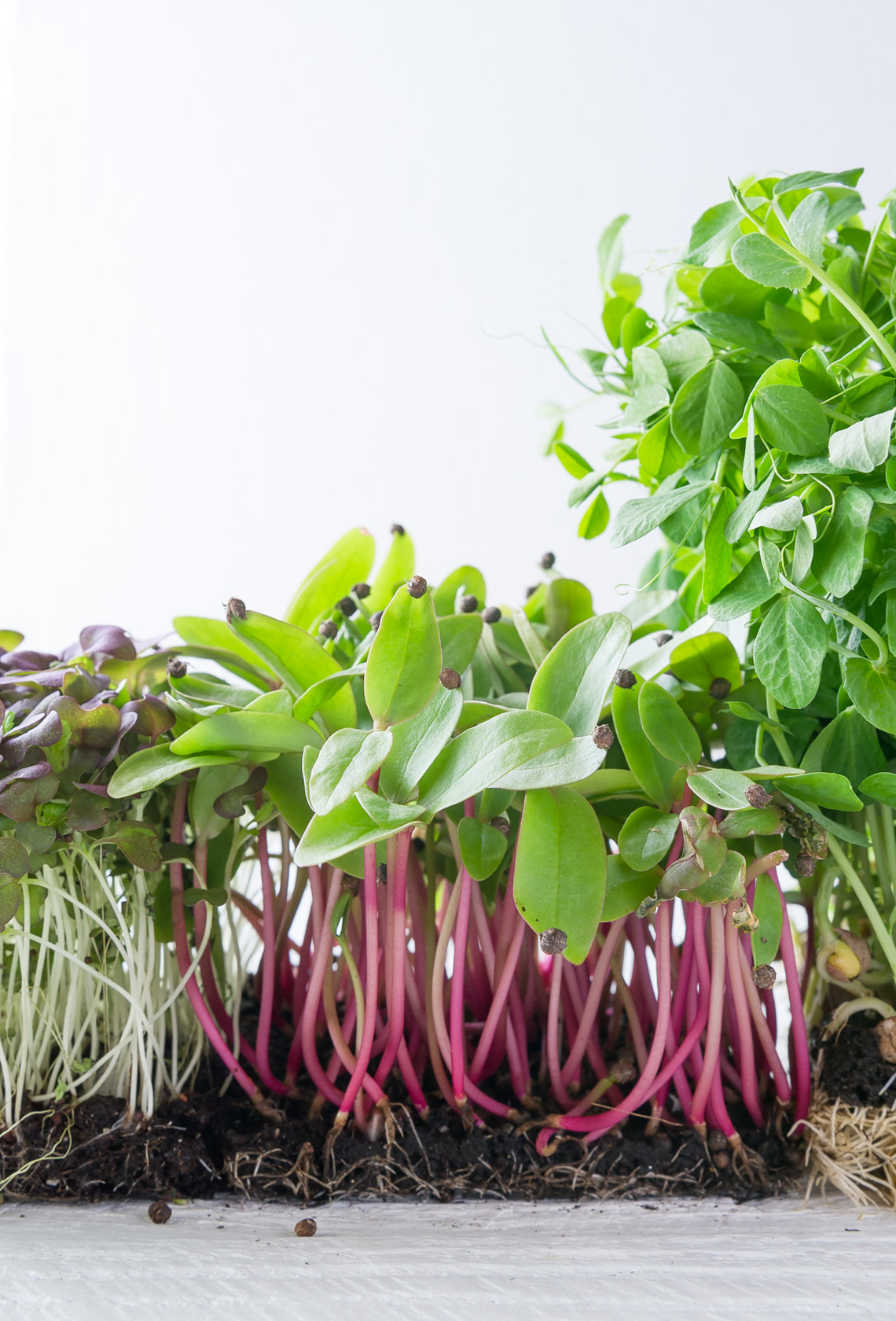 NYC Food Photographer- The Microgreens Cookbook Rizzoli