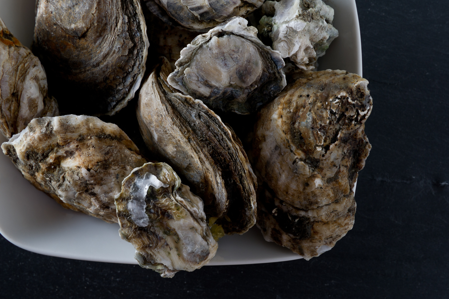 NYC Food Photographer - Raw Oysters