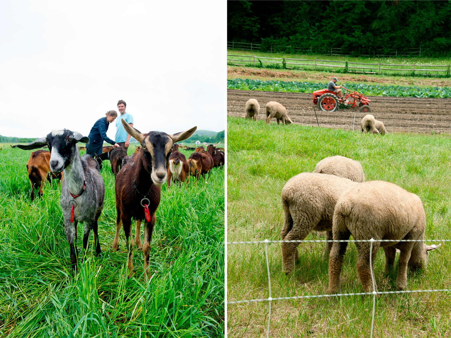 Consider Bardwell Farm and Annandale Farm